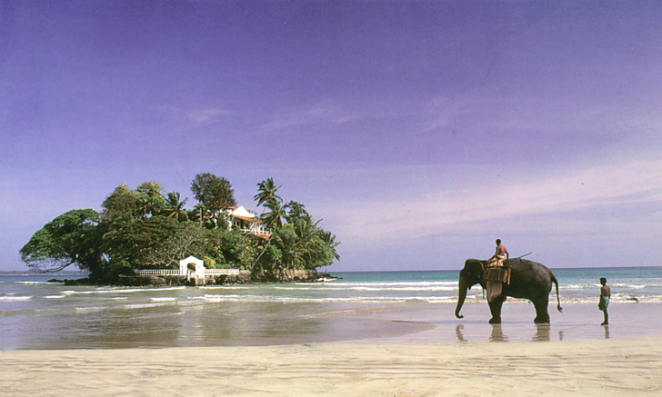 SriLanka - slon