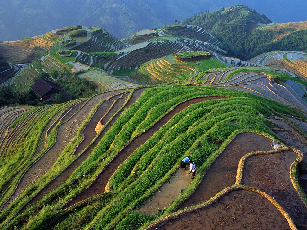 rice-fields-longji-china_65290_990x742